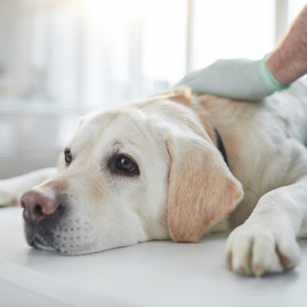 Tierarzt Notfall